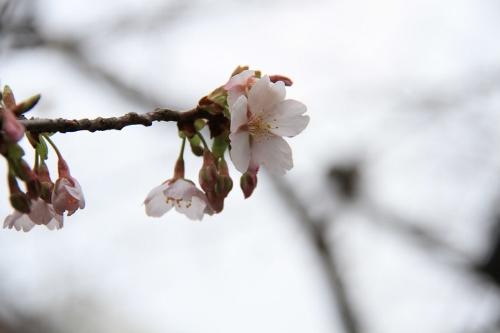 恒例の鎌倉12