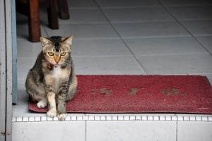 Singapore Shophouse Cat