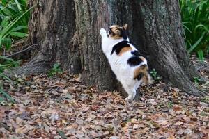 Sakura-chan The Cat Scratching Tree