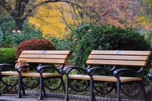 Cat on Bench in Autumn