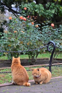 Cat Brothers and Roses