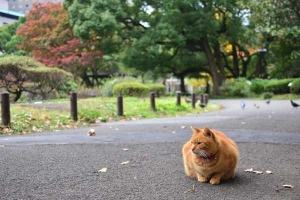Ai-chan The Cat in Autumn