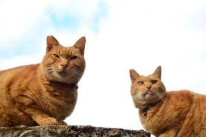 Cat Brothers against The Sky