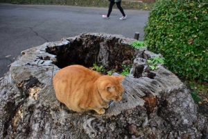 Ai-chan The Cat on Tree Stump