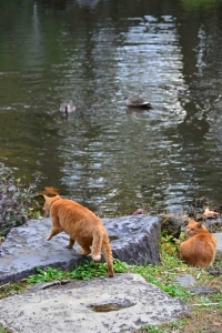 Cat Brothers By The Pond