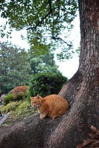 茶トラ猫 愛ちゃん Ai-chan The Cat