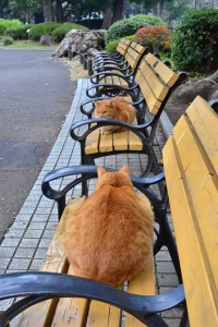 Cats - Bench Brothers