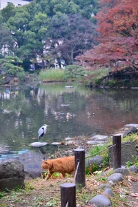 Ai-chan The Cat By The Pond