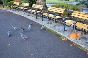 Cat, Benches and Pigeons