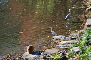 Cat, Heron and Egret