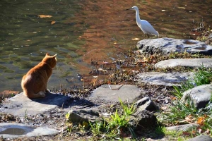 Cat and Egret