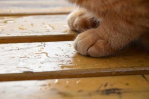Cat Feet on Wet Bench