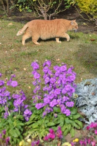 Cat in Flower Garden