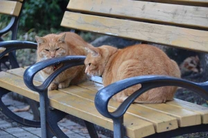 Bench Cats: Ai-chan The Cat, right, and His Brother