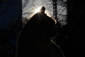 Cat and Morning Sun, New Year's Day 2013