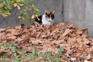 Cat In Fallen Leaves