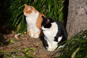 Cat Duo Sunning