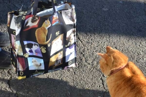 Ai-chan The Cat and Cat Lover's Bag