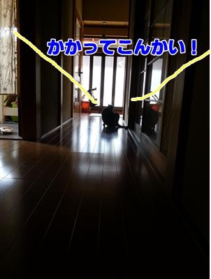 20130415_102034.jpg