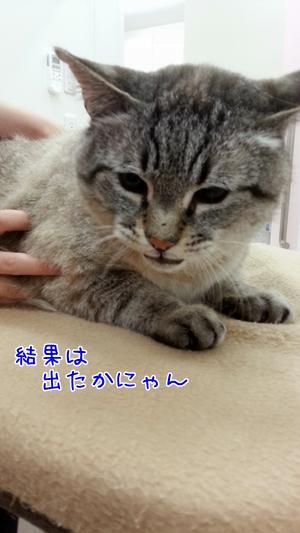 20130607_085956.jpg