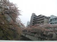 神田川沿い1