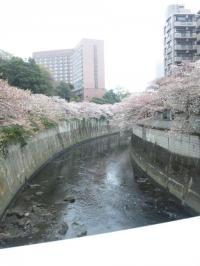 神田川沿い2