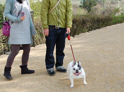 2甘樫犬1