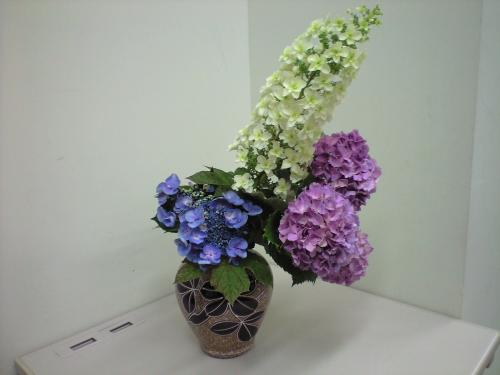 柏葉紫陽花