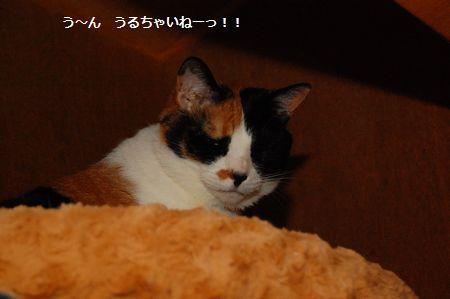 20120525mikan2.jpg