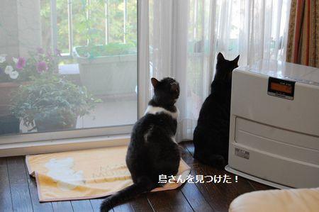 20120528kotetsumiikun.jpg
