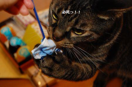 20120609kotetsu.jpg