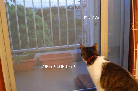 20120820miikun2.jpg