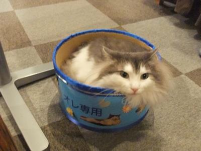 サスケ缶1