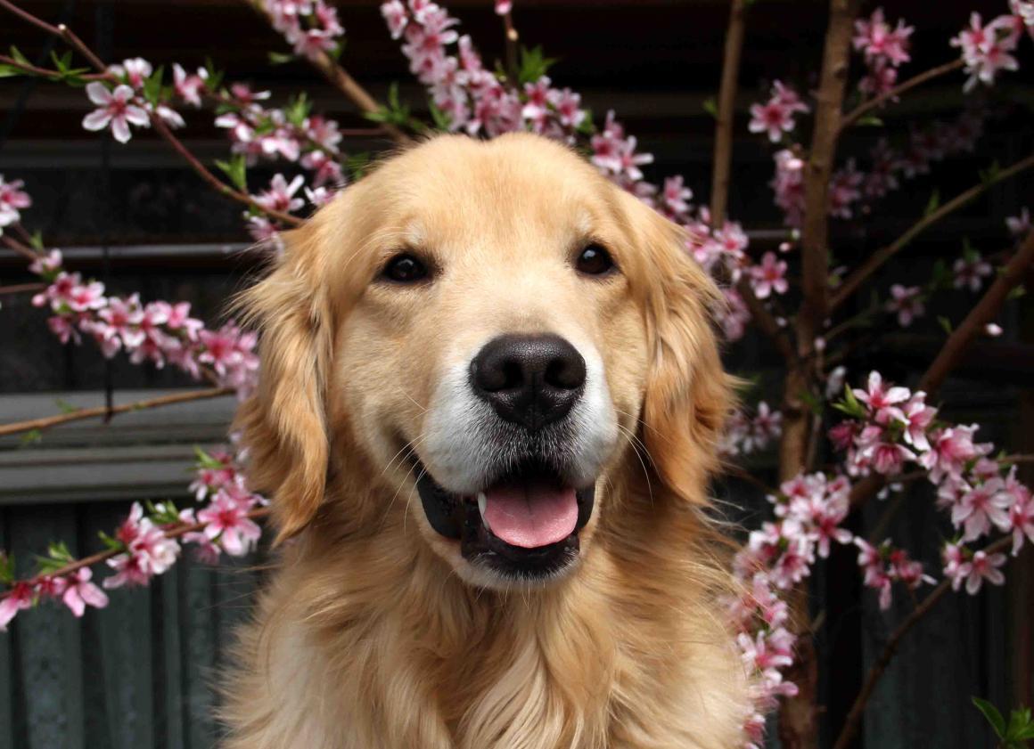 桃の花とヒット(3月23日)(2)