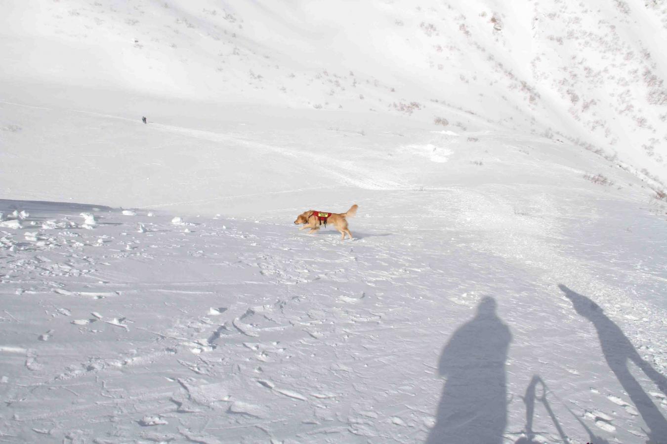 2013 全国雪崩 2月10日(136)