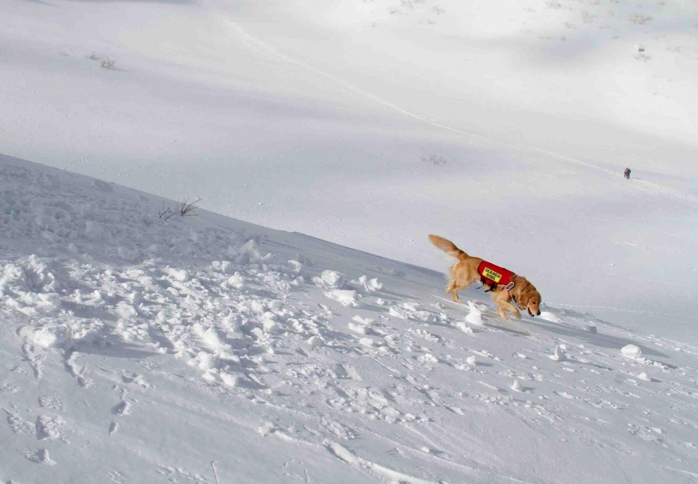 2013 全国雪崩 2月10日(137)