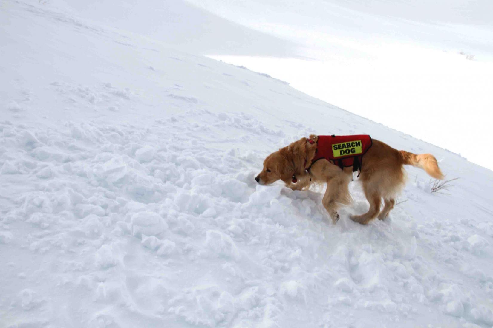 2013 全国雪崩 2月10日(138)