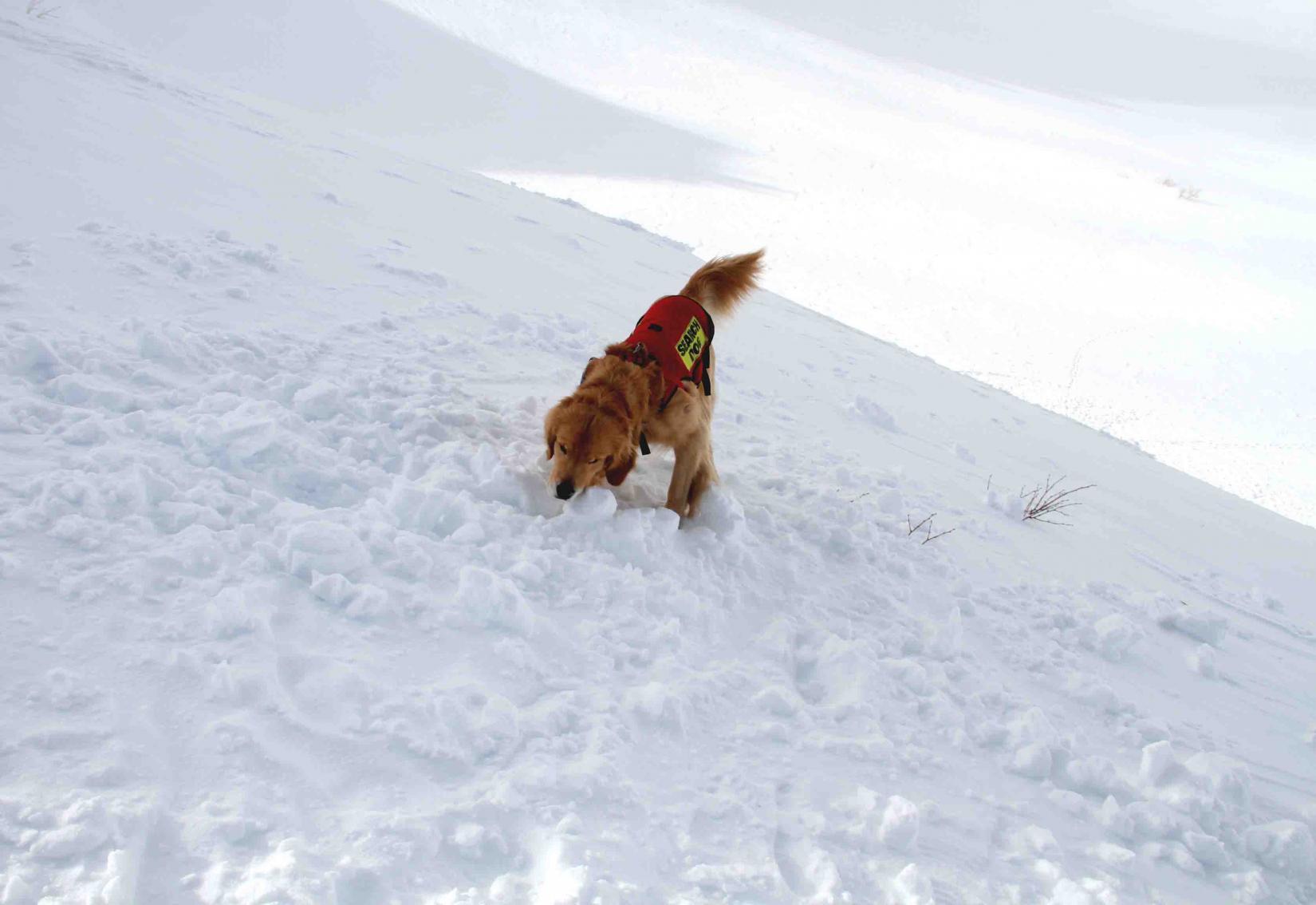 2013 全国雪崩 2月10日(139)