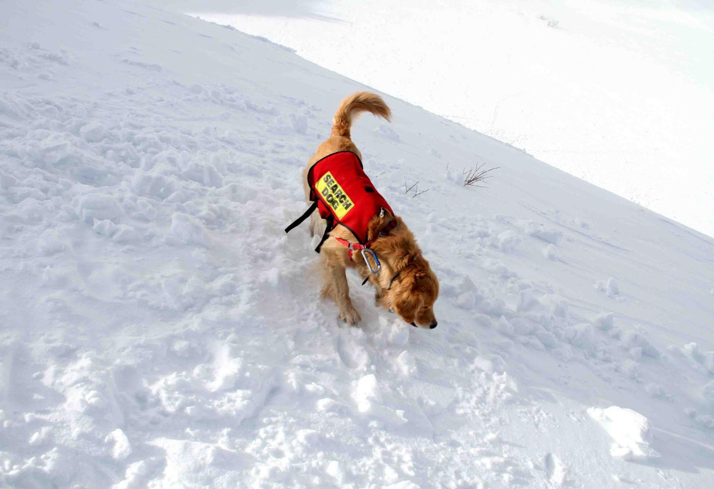 2013 全国雪崩 2月10日(140)