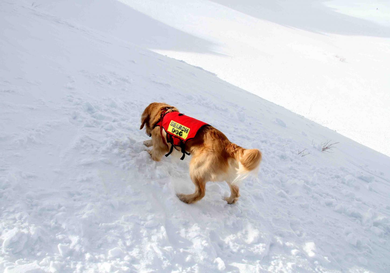 2013 全国雪崩 2月10日(141)