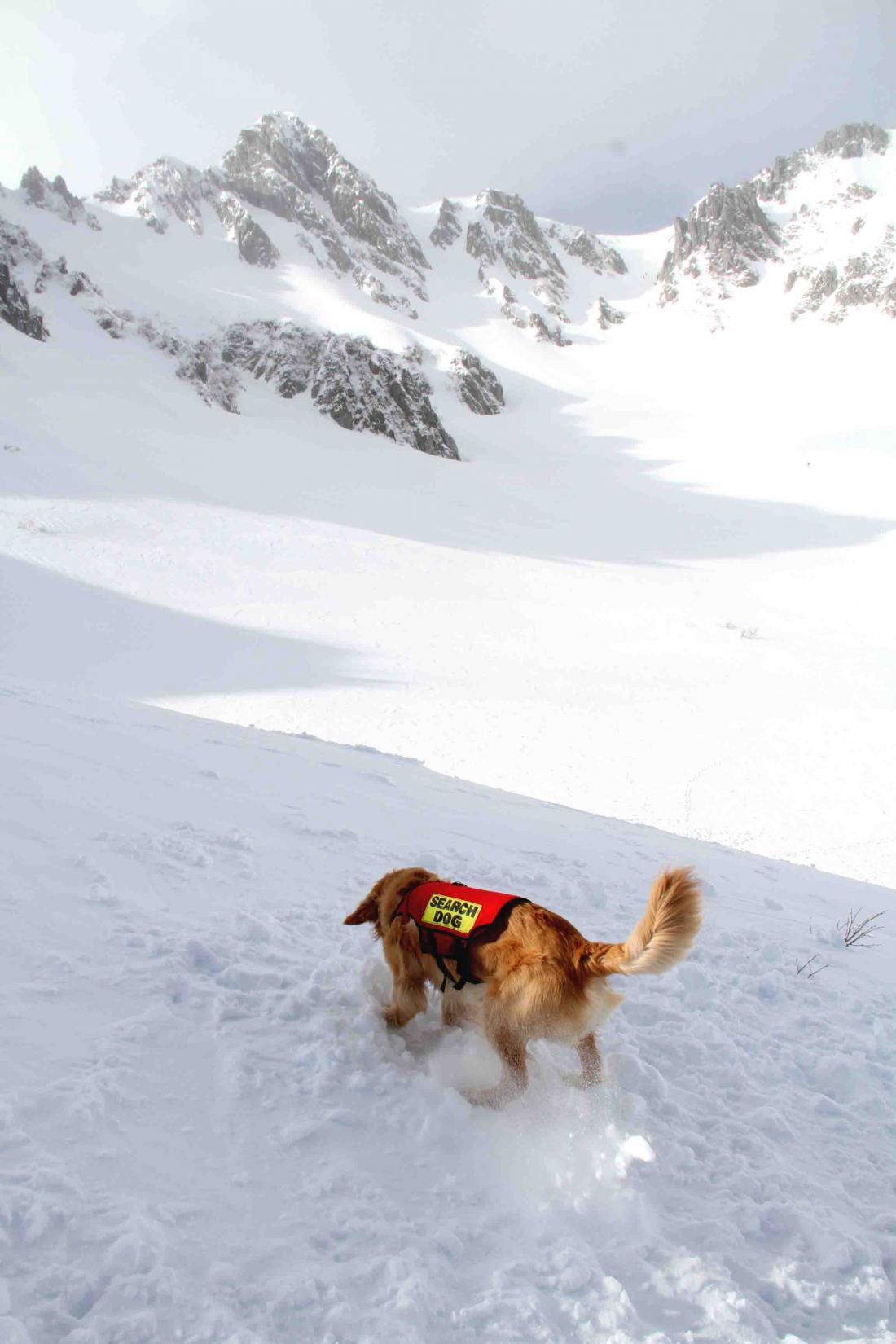 2013 全国雪崩 2月10日(142)