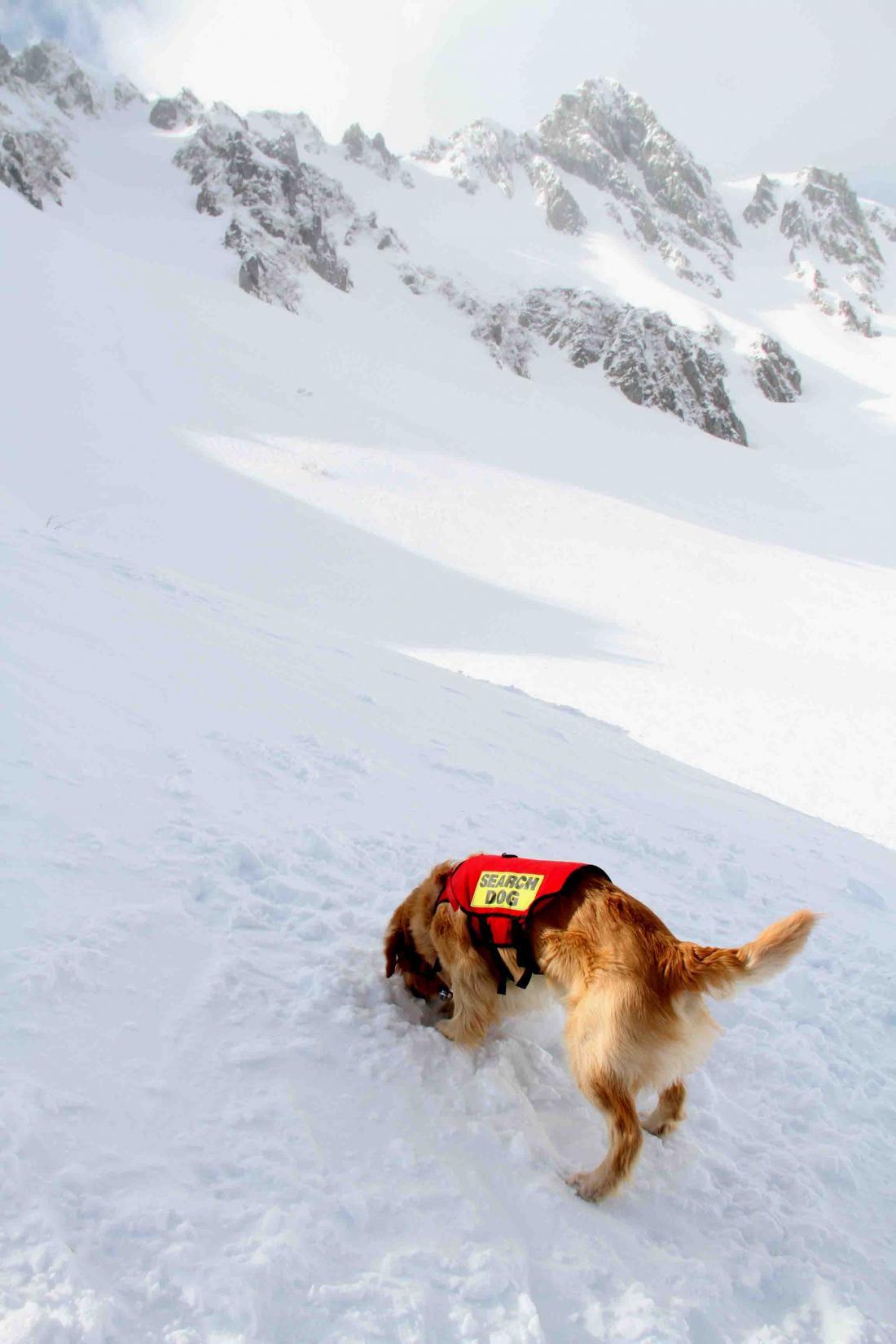 2013 全国雪崩 2月10日(143)