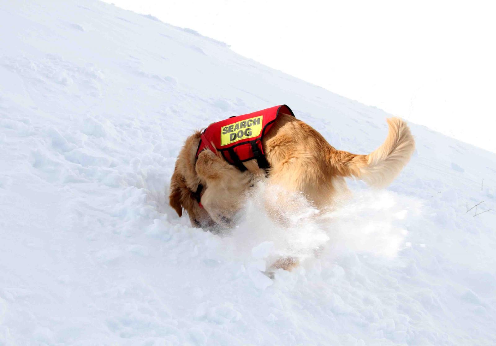 2013 全国雪崩 2月10日(145)
