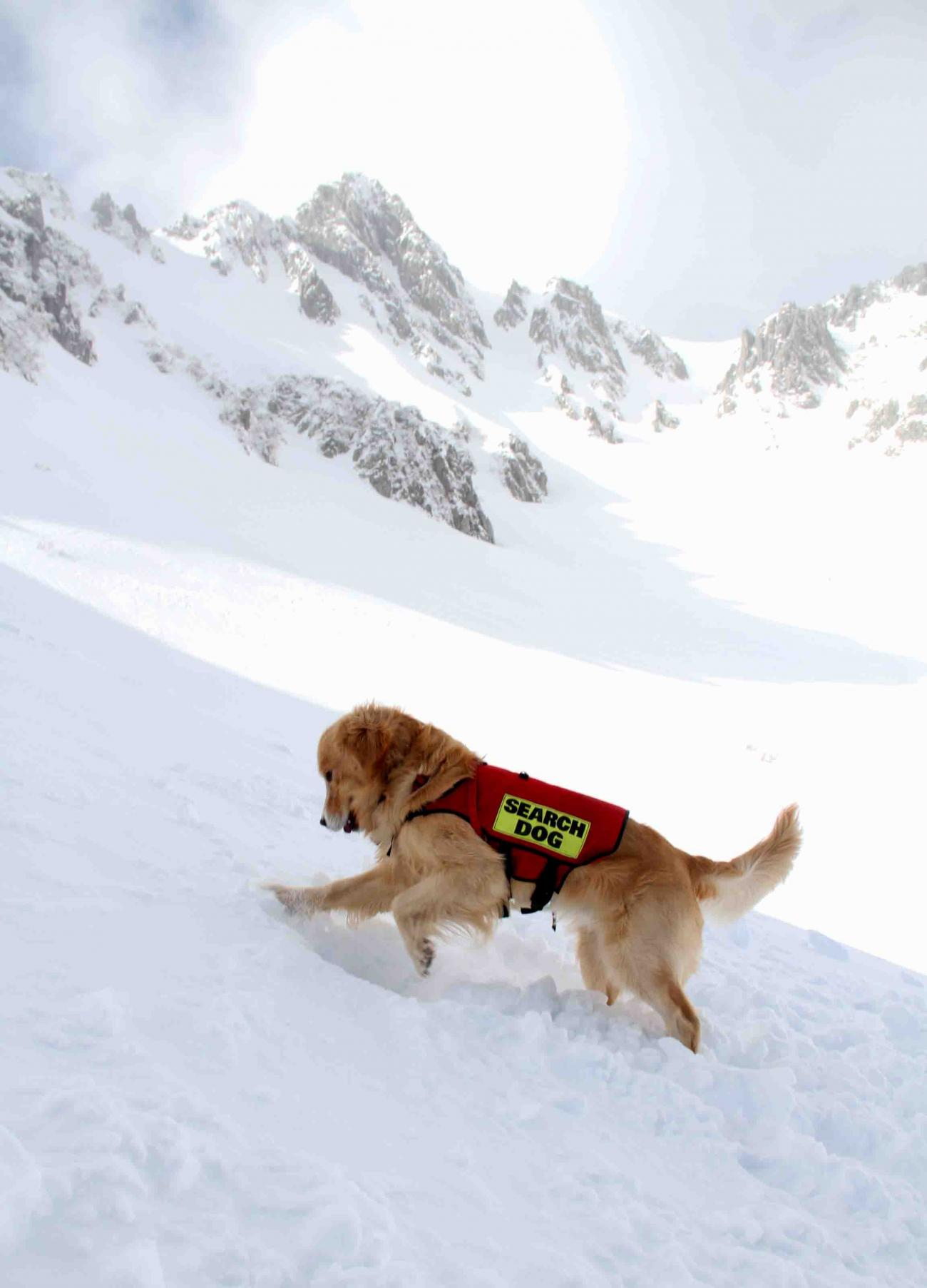 2013 全国雪崩 2月10日(146)