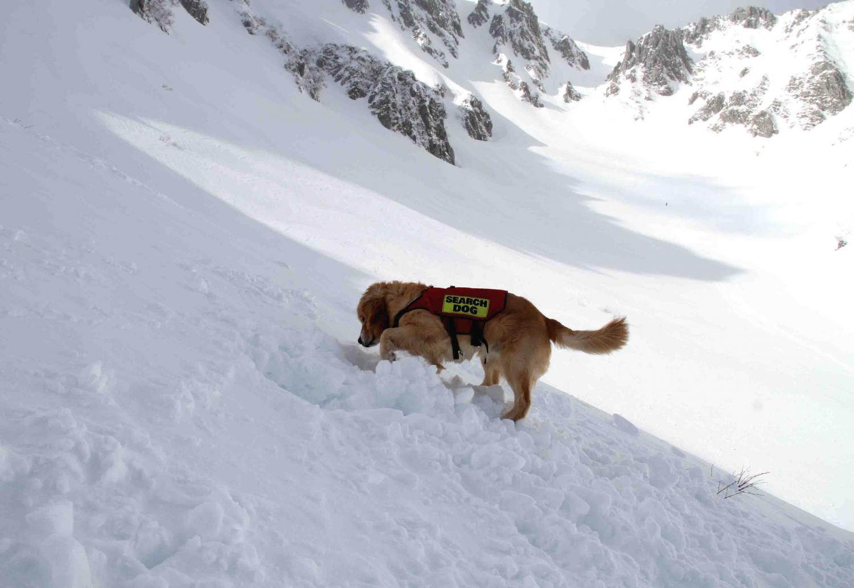 2013 全国雪崩 2月10日(147)