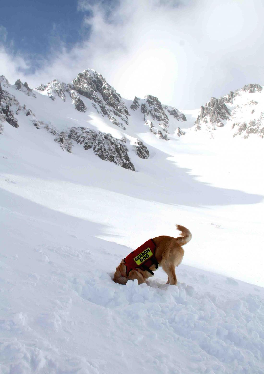 2013 全国雪崩 2月10日(148)
