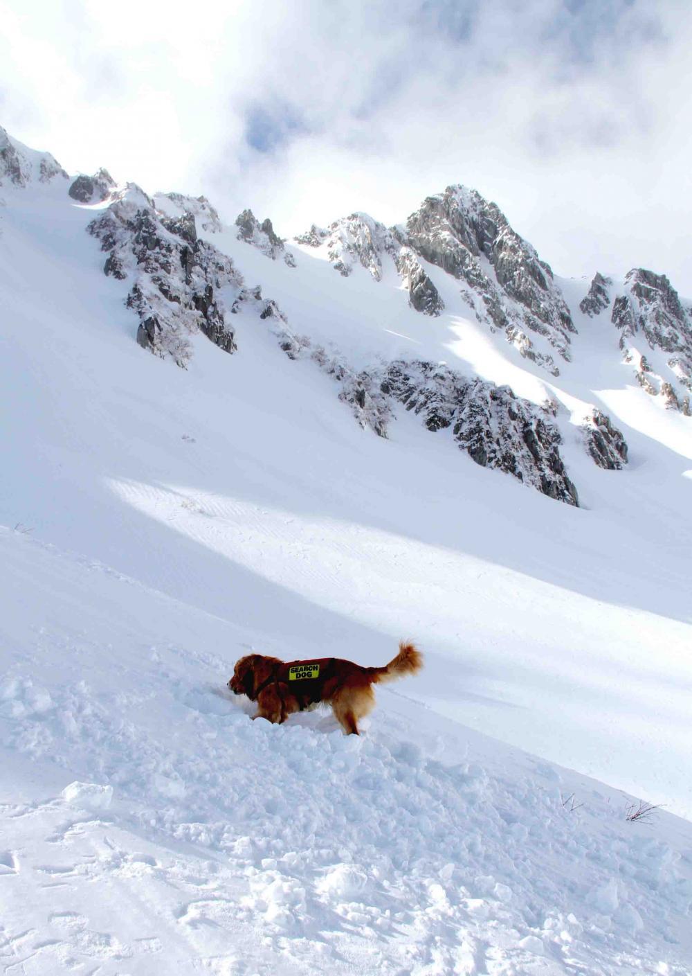 2013 全国雪崩 2月10日(149)
