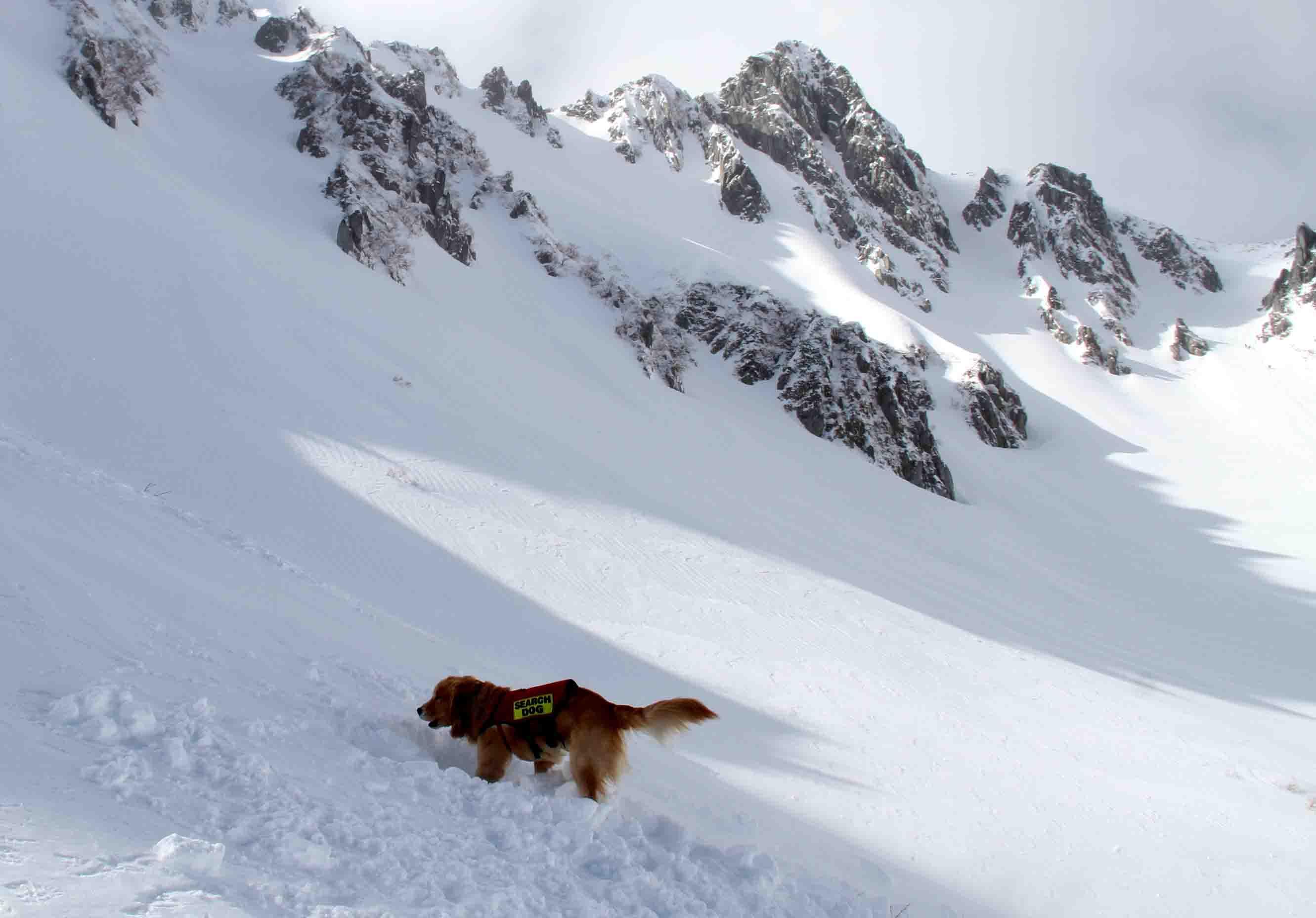 2013 全国雪崩 2月10日(150)