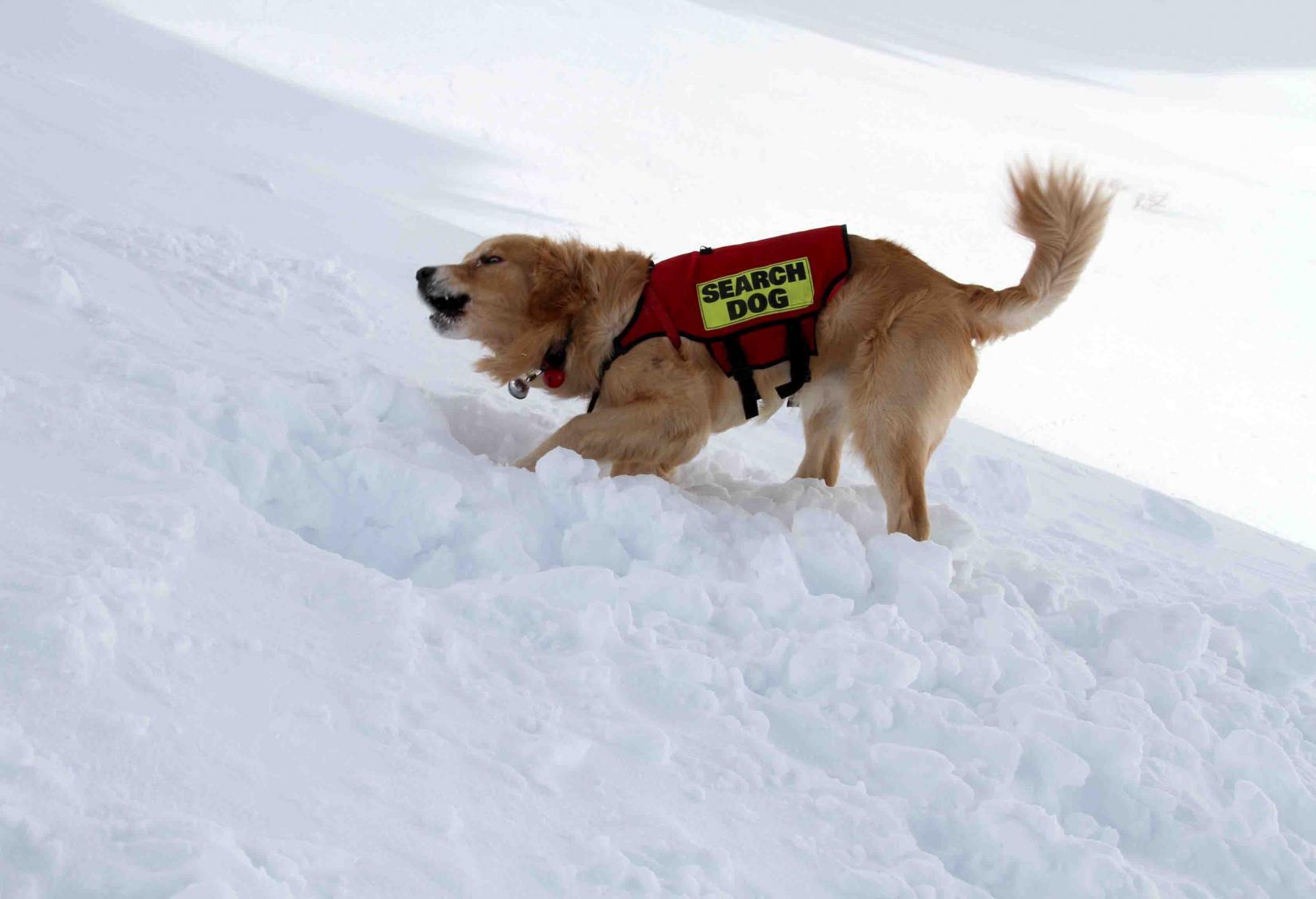 2013 全国雪崩 2月10日(151)