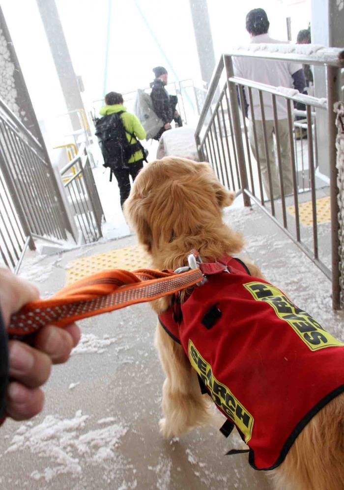 2013 全国雪崩 2月11日(173)